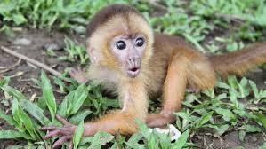 what is a monkey u0027s habitat reference com