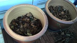 how make self watering pots morag gamble our permaculture permaculture pots