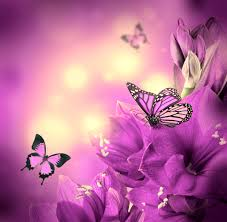flower purple flowers butterflies beautiful flower hd pictures