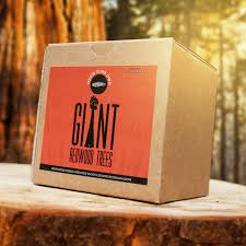 grow your own redwood tree kit the green