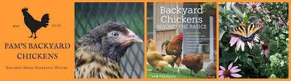Backyard Chicken Com Backyard Chickens