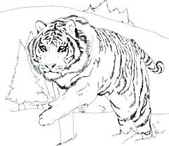 coloring page tiger paw coloring page of a tiger adult coloring pages tiger preschool in