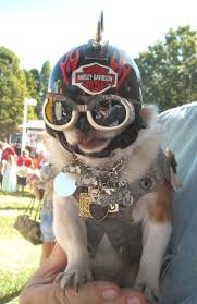 104 best biker dogs images on pinterest biker dogs and doggies