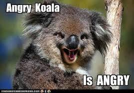 Angry Koala Meme - angry koala koalas pinterest