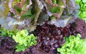 organic certification friendly aquaponics