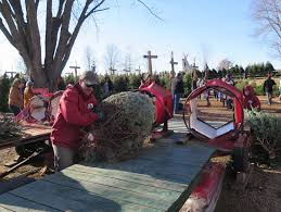 traditions intertwine at christmas tree farm in lake elmo