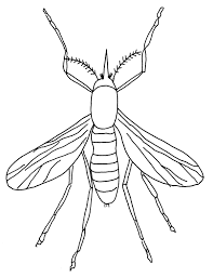 popular insect coloring pages awesome coloring 2370 unknown