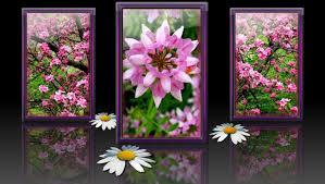 Spring Flower Bouquets - flowers spring flowers purple beauty bouquet flower daisy