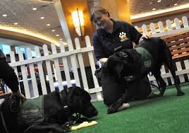 Las Vegas Blind Center Guide Dogs For The Blind Train 400 Puppies Annually U2014 Video U2013 Las