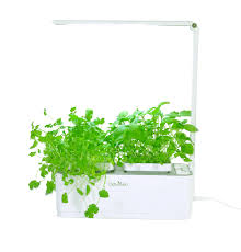 herb odyseed eden grow your own aromatic herbs