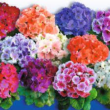 indoor flowering plants indoor flowering plant plants pinterest indoor flowering