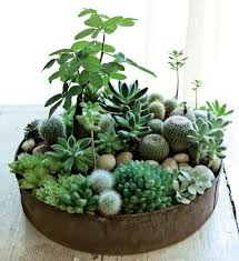 best 25 indoor succulent garden ideas on pinterest indoor indoor