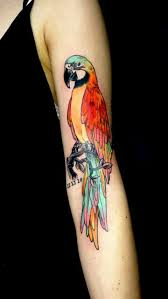 the 25 best parrot tattoo ideas on pinterest cool pencil