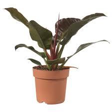 List Of Tropical Plants Names - plants and plant pots ikea