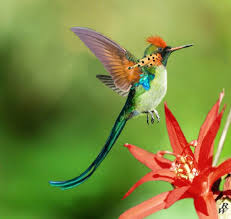 is this not the most beautiful hummingbird you u0027ve ever seen