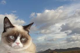 Meme Generator Grumpy Cat - grumpy cat sky meme generator imgflip