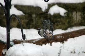 feeding birds in your backyard dawes arboretum