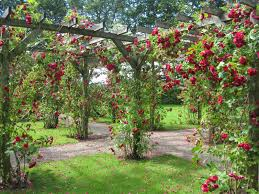 Beautiful Garden Images Big Rose Garden Rose Garden Free Hd Wallpapers In Red Yellow Blue