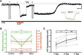 serotonin and antidepressant ssris inhibit rat neuroendocrine