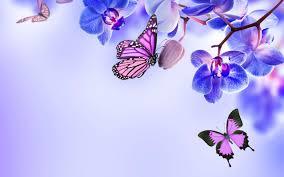 beautiful butterfly wallpaper on wallpaperget com