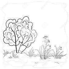 vector landscape garden with a grass flowers and bush contours