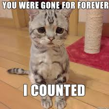 Sad Kitten Meme - funny i miss you memes and images for him and her i miss you quotes