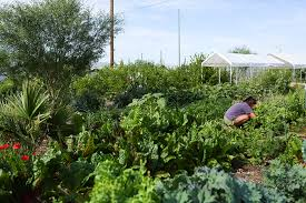 Urban Gardens Phoenix - new urban farm project means more food less labor the society