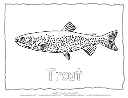 coloring trout coloring apache eat insect colouring