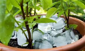Watering Vertical Gardens - starting a vertical garden homesteading simple self sufficient