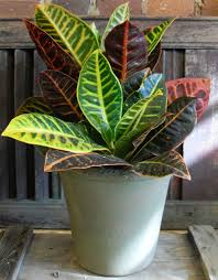 ideas tropical indoor plants u2013 home design and decor