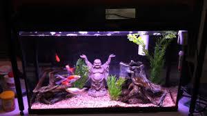 Aquarium Decoration Ideas Freshwater Aquarium That Requires No Water Changes Youtube