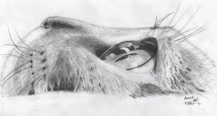 imagenes a lapiz de gatos dibujando on twitter gato por jezulini del pepino http t co
