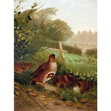 pheasant home decor 1885 chromolithograph bird print by louis prang partridge home