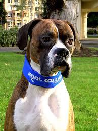 kool collar cooling collar cozywinters
