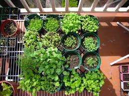 gorgeous starting vegetable garden 5 tips on how to start a family