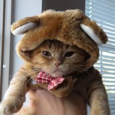 Halloween Costume Cats Halloween Cat Costumes Kitty Tees