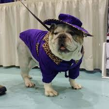 bulldog pimp halloween dog costume dog halloween costumes