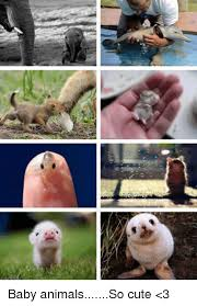 Cute Baby Animal Memes - 25 best memes about baby animals baby animals memes