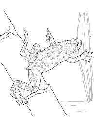 african dwarf frog coloring free printable coloring pages