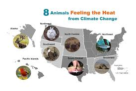 Alaska Wildfire Climate Change by Eight Animals Feeling The Heat From Climate Change Climate