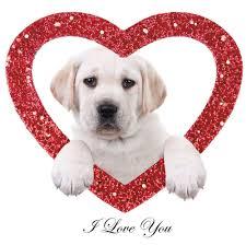 Leanin Tree Dog Christmas Cards by Anniversary Card Birthday Card I Love You Yellow Labrador Dog