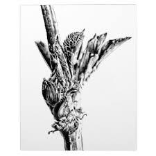sketched flowers photo plaques zazzle