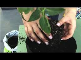 tomatoes and indoor vegetable gardens the best way to grow