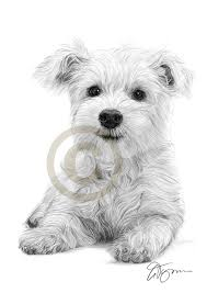 pencil drawing of a west highland white terrier puppy by artist