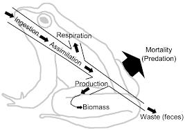 ecosystem wikipedia