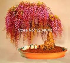 ornamental trees canada best selling ornamental trees from top