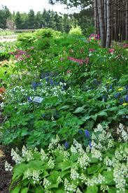 nurseries in atlanta homewood nursery 73 best woodland gardens images on pinterest woodland garden