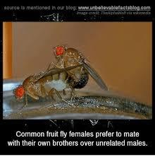 Fly Meme - 25 best memes about fruit flies fruit flies memes