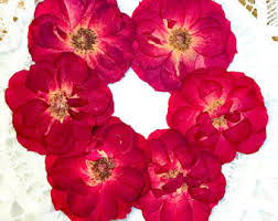 dried roses dried roses etsy