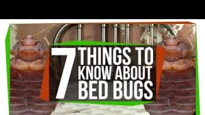 Bed Bugs What To Do What To Do If Your Airplane Has Bedbugs
